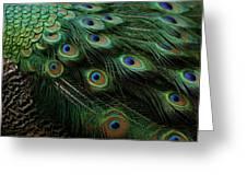 Pure Peacock Greeting Card