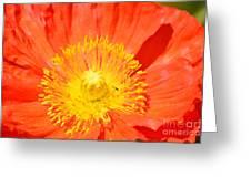 Pure Poppy Sunshine Greeting Card