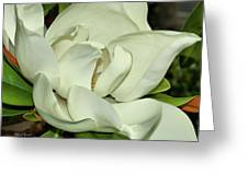 Pure White Fragrant Beauty Greeting Card