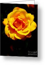 Pure Yellow Petals Greeting Card