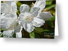 Purest White Greeting Card