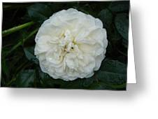 Purity And Perfection Greeting Card