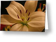 Purity In Full Bloom Greeting Card