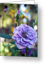 Purple Rose Glow Greeting Card
