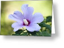 Purple Althea Greeting Card