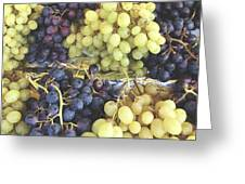 Purple And Green Grapes Greeting Card