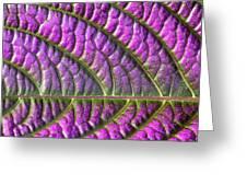 Purple And Green Leaf Greeting Card
