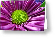 Purple And Green Greeting Card