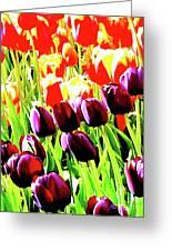 Purple And Peach Tulips 2 Greeting Card