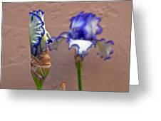 Purple And White Bearded Iris Bud Greeting Card