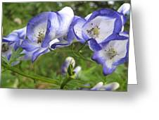 Purple And White Flowers Greeting Card