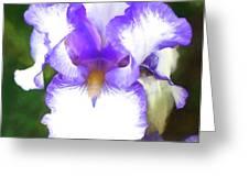 Purple And White Iris Greeting Card