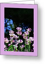 Purple And White Tulips - Photopainting Greeting Card
