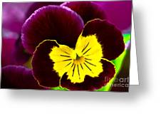 Purple And Yellow Pansy Greeting Card