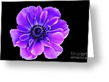 Purple Anemone Flower Greeting Card
