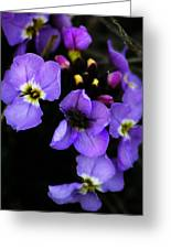 Purple Arctic Wild Flowers Greeting Card