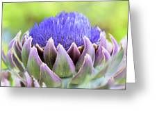 Purple Artichoke Flower  Greeting Card