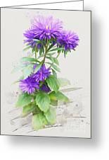 Purple Aster Greeting Card