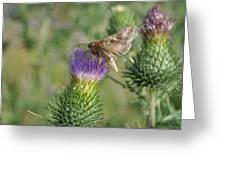 Purple Attratcion Greeting Card