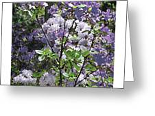 Purple Azaelas Greeting Card