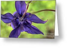 Purple Beaut Greeting Card