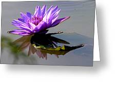 Purple Beauty On The Pond Greeting Card