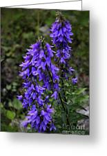 Purple Bell Flowers Greeting Card