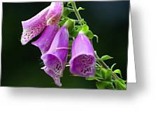 Purple Bells Horizontal Greeting Card