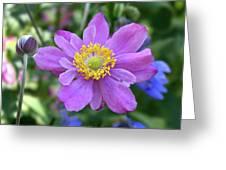 Purple Blossom 1 Greeting Card