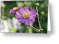 Purple Blossoms 2 Greeting Card