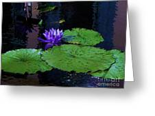 Purple Blue  Lily Greeting Card