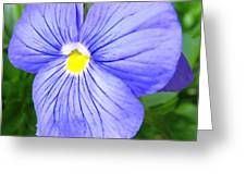 Purple Blue Pansey Greeting Card