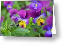 Purple Blue Yellow Greeting Card