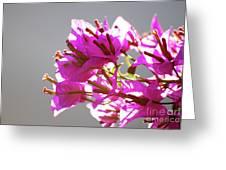 Purple Bougainvillea Flower Greeting Card