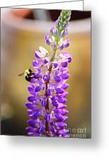 Purple Buzz Greeting Card