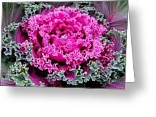 Purple Cabbage Greeting Card