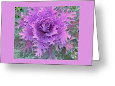 Purple Cabbage Plant Greeting Card