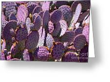Purple Cacti Greeting Card