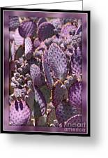 Purple Cactus Canvas Greeting Card