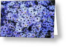 Purple Carpet Greeting Card