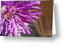 Purple Chinese Aster Greeting Card