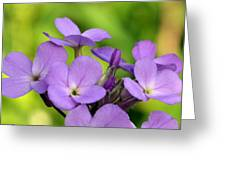 Purple Greeting Card