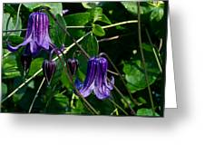 Purple Clamatis Bells Greeting Card