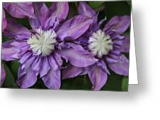 Purple Clematis 2 Greeting Card
