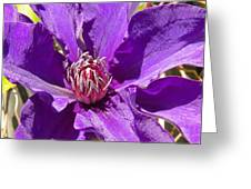 Purple Clematis IIi Greeting Card