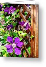 Purple Clematis On Trellis Greeting Card