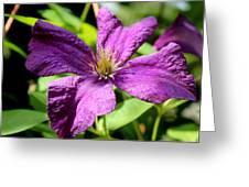 Purple Climber Greeting Card