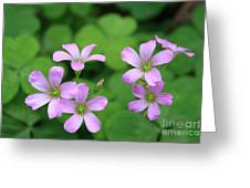 Purple Clover Greeting Card