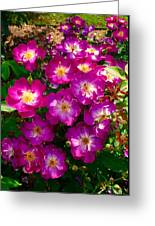Purple Cluster 2 Greeting Card