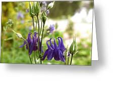 Purple Columbines Greeting Card